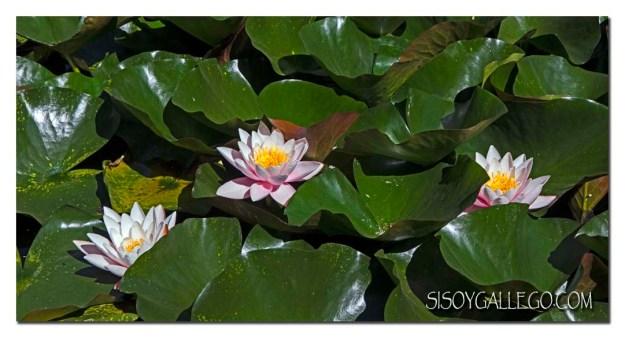 204_jardin-botanico