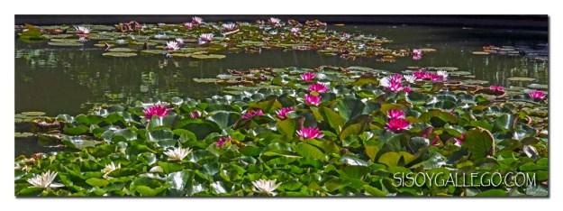 208_jardin-botanico
