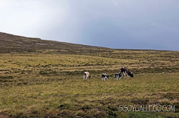 IMG_6360.Paisaje con vacas.