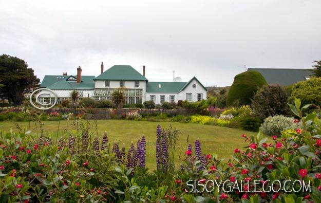 IMG_6684.Malvinas.Falkland