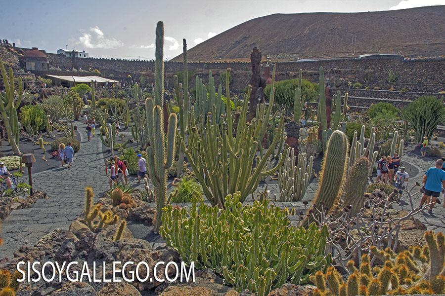 21.-Jardin Cactus