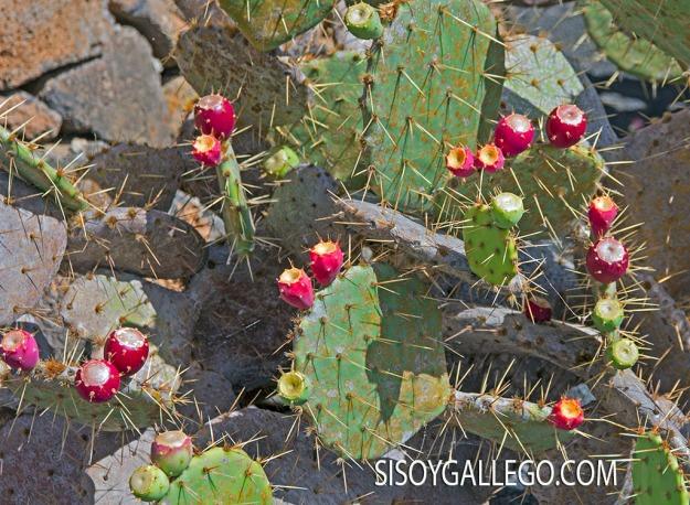 24.-Jardin Cactus