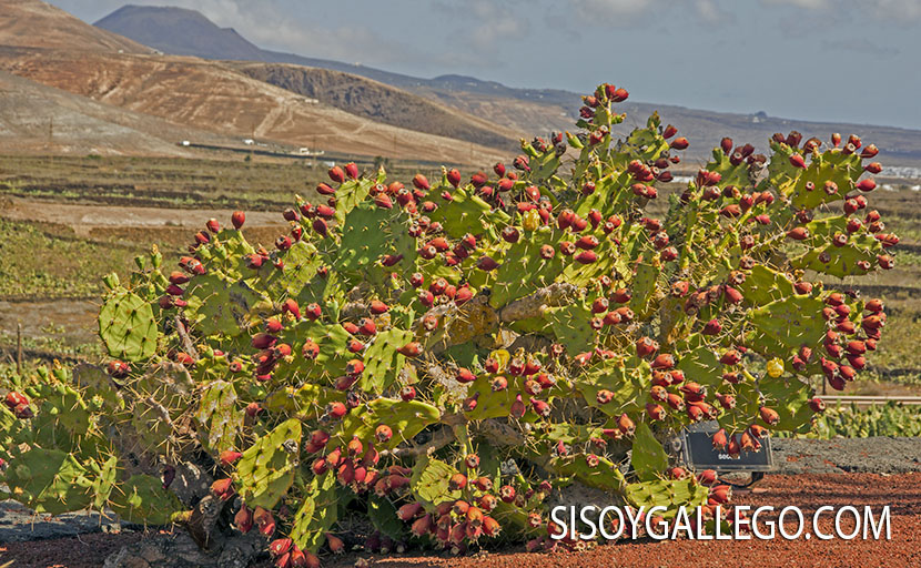 41.-Jardin Cactus