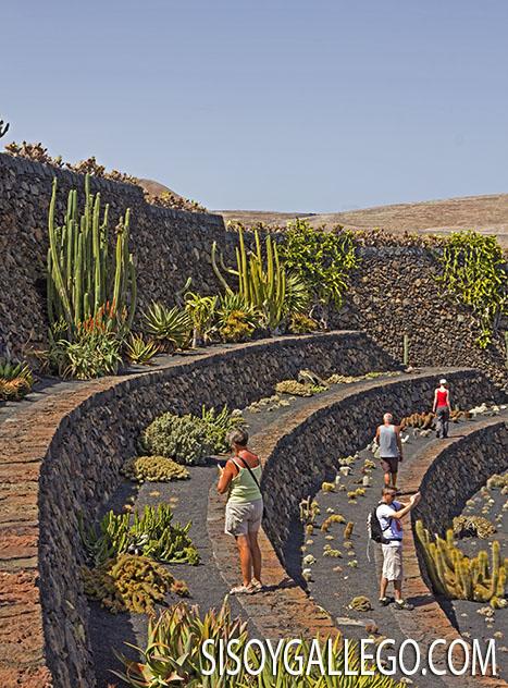 62.-Jardin Cactus