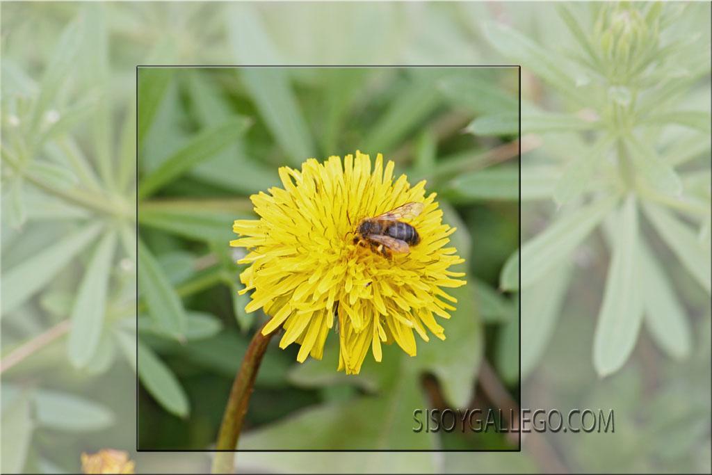 14.Flores silvestres